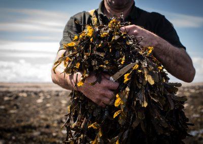 VOYA hand harvested seaweed